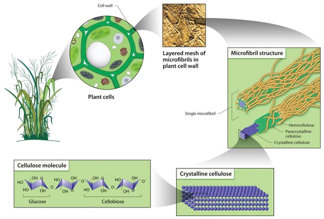 Cellulose Structure and Hydrolysis Challenges