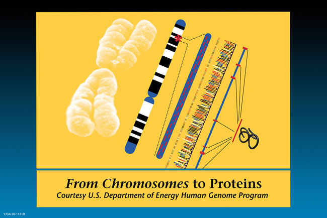 From Chromosomes to Proteins