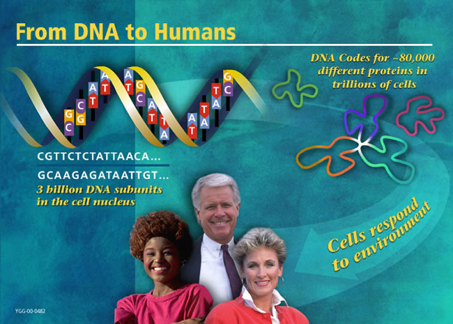 From DNA to Humans