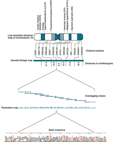 Genomic Geography: Chromosome 19