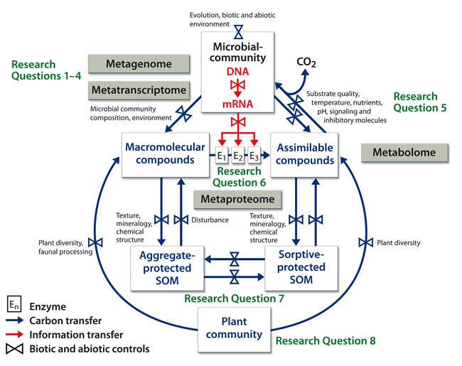 Microbial Communities and Soil Carbon Cycling and Storage