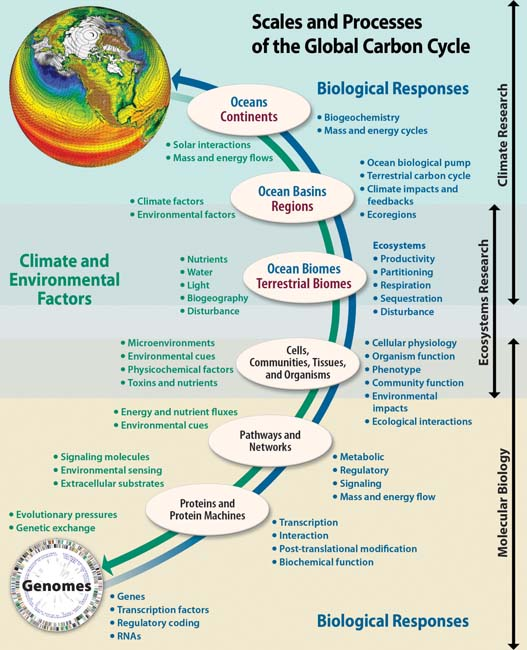 Scales and Processes of the Global Carbon Cycle