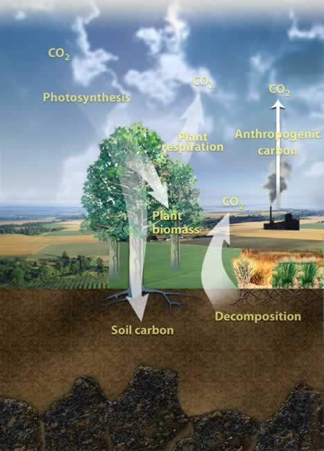 Processes of the Terrestrial Carbon Cycle