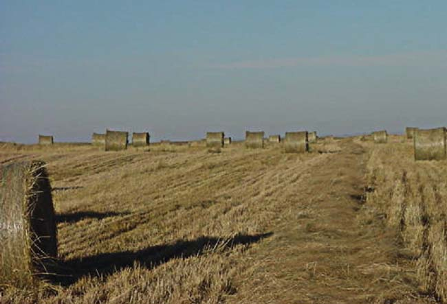 Switchgrass Bales from a 5-Year-Old Field in Northeast South Dakota in 2005