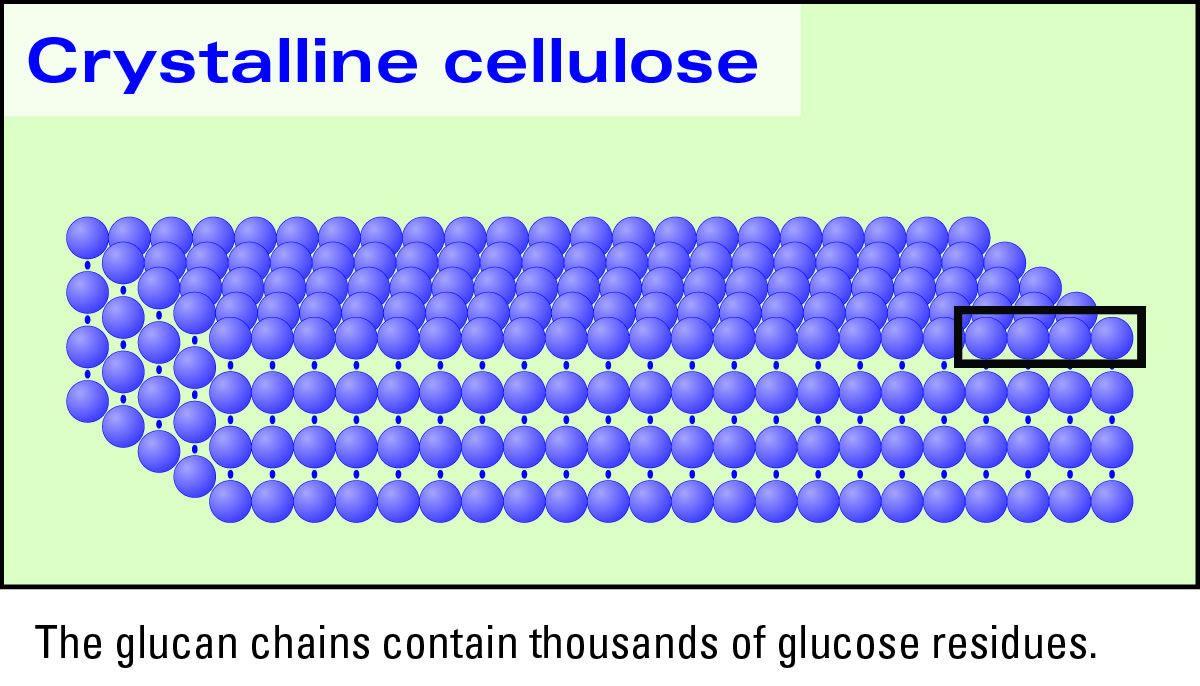 genomics of cellulosic biofuels The development of alternatives to fossil fuels as an energy source is an urgent global priority cellulosic biomass has the potential to contribute to meeting the demand for liquid fuel.