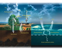 Components of the Global Carbon Cycle (Cover Image)