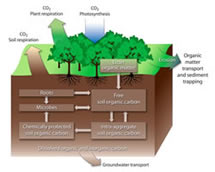 Carbon Transformation and Transport in Soil