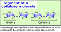 Fragment of a Cellulose Molecule