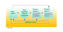Gene Regulatory Network (GRN) Version 2