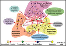 Multinetwork Analysis of a Carbon- and Nitrogen-Responsive Metabolic Regulatory Network