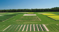 Great Lakes Bioenergy Research Center Sustainable Biofuel Landscapes