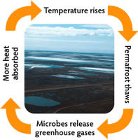 Microbial Processes in Thawing Permafrost Soils