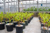 GLBRC Research on Bioenergy Crop Sustainability